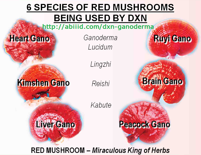 6 species of red mushrooms being used by DXN