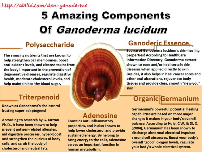 5 Amazing Components of Ganoderma Lucidum